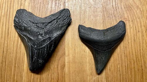 Jacob Danner has discovered two megalodon teeth on Florida beaches in the space of weeks.