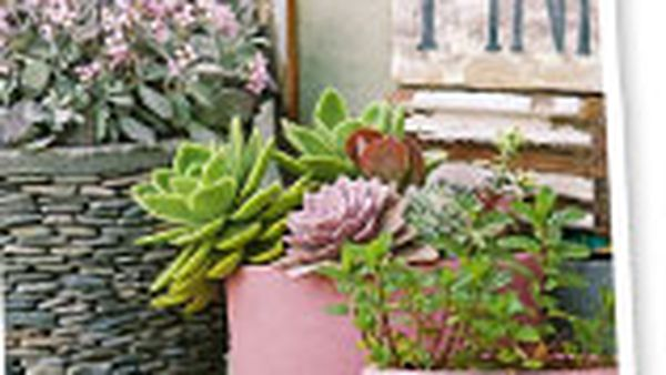 Plants to survive the drought