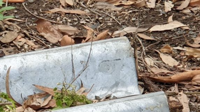 The Australian Snake Catchers were called to Australia Post in Granville today for not one, two or three, but four snakes on the grounds.