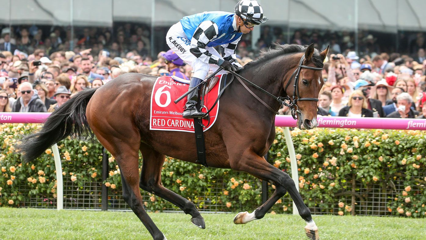 Red Cardinal ahead of the 2018 Melbourne Cup