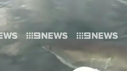 Warren Brown estimates the shark was four metres long. (9NEWS)
