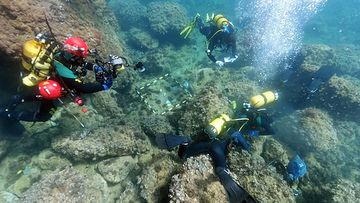Amateur freedivers discover gold coins believed to date back to the fall of the Western Roman Empire.
