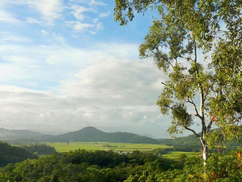 """The Port Douglas homestay has two bedrooms and is """"one of the most unique properties"""" in the area. (NaturistBnB)"""