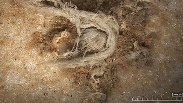 World's oldest string of yarn