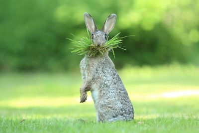 "<strong>Highly Commended: ""Eh What's Up Doc?"" by Olivier Colle</strong>"
