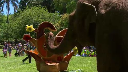Tricia the Asian elephant has celebrated her 61st birthday. (9NEWS)