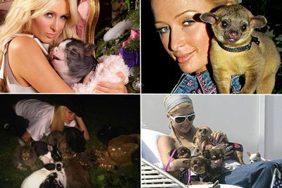 Paris Hilton doesn't just collect dozens of cute dogs and cats, she also has a teacup pig called Miss Piglette, a whole family of rabbits, a parrot and – until it attacked her and had to be taken away by authorities – a kinkajou.