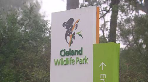 The koalas and wombats will travel from Cleland Wildlife Park to England in two days.