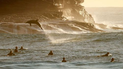 'Stay positive': Dolphins bring much-needed smiles to Bronte beachgoers