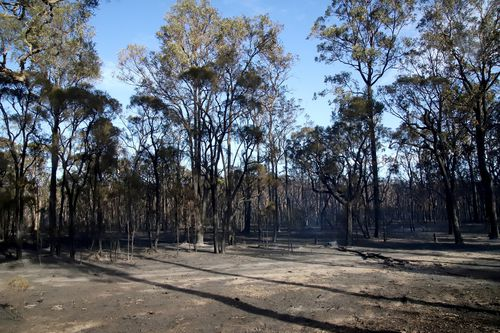 Once pristine bushland has been ravaged by the fires. (AAP)