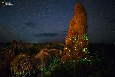'Bioluminescence Ecosystem' by Marcio Cabral