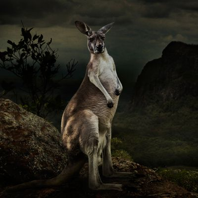<strong>Dasha Riley 'The Journey of George Stubbs' Kangaroo'</strong>