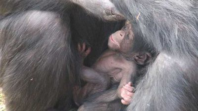 The birth boosts conservation efforts.