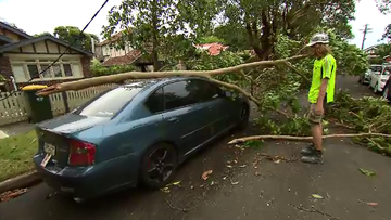 Wild weather brought trees and power lines down earlier this week, with thousands of homes and businesses still without electricity.