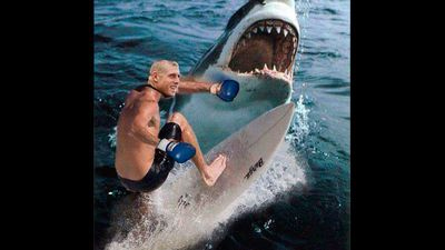 Fanning said he punched the shark in the back to get away. This meme illustrates what that might have looked like.
