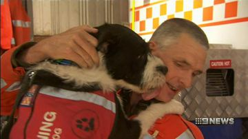 VIDEO: Dog supporting the mental health of emergency workers