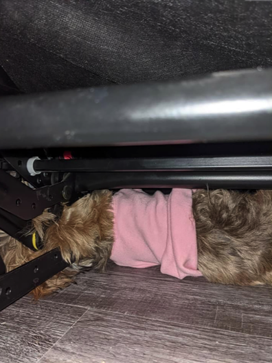 Fire department rescues dog stuck in couch