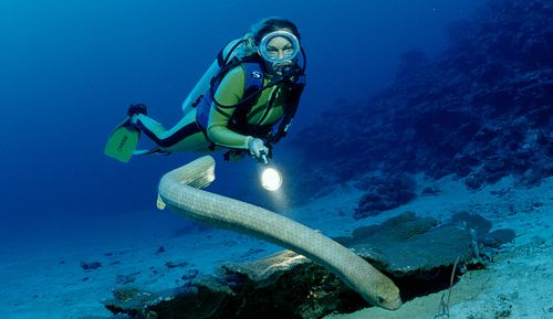 The Marine Education Society of Australia said sea snakes, of which there are various species are among the world's most venomous creatures, though don't bite unless provoked or disturbed.
