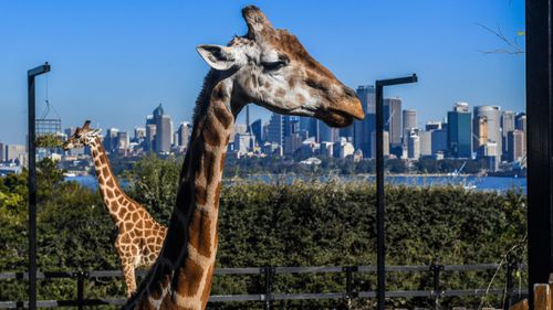 The affected baby visited Sydney tourist sites including Taronga Zoo.