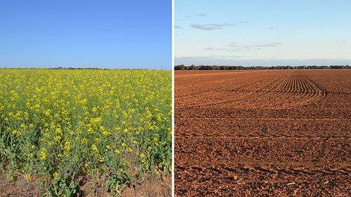 The difference two years makes: Ms Grech's farm in 2016 and this season after a drought ravaged New South Wales.