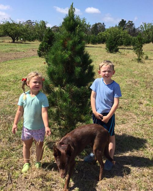 Lynette's children in her orchard, which sells Christmas trees every year, however younger trees are dying because of the drought.
