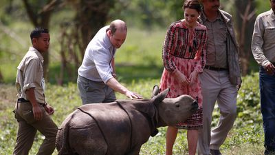 <p>The Duke and Duchess of Cambridge, William and Kate, have visited celebrities and slums, played cricket, gone on safari and more on their royal tour of India and Bhutan.</p><p>Here, William pats an orphaned baby rhinoceros at the Kaziranga wildlife centre, in the north-eastern state of Assam, on day four of the royal tour.</p><p><strong>Click through the gallery to see more of the royal couple's adventure.</strong></p><p>(All images / AFP)</p>