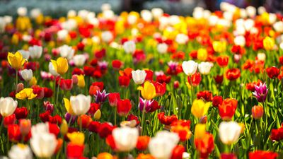 <strong>Floriade flowers</strong>