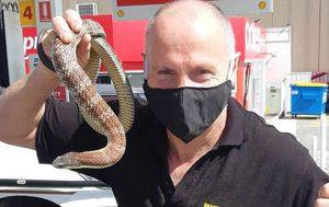 Snake catcher 'staged' deadly encounter on Melbourne petrol pump