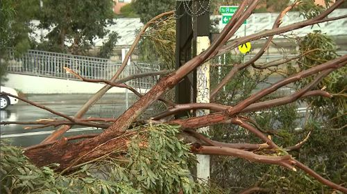 Trees had toppled onto cars, homes, power lines and train tracks but not major power outages were recorded. Picture: 9NEWS.