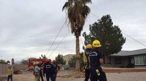 Firefighter crews were not able to see the patient in the tree because of the palm fronds that were hanging down, completely covering him. (Supplied)