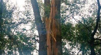 A tree bore the brunt of a lightning strike, which hit close to the evacuation centre in Pinjarra. (Ben Hennessy/9NEWS)