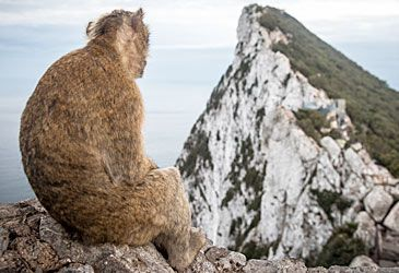 Daily Quiz: Gibraltar shares a land border with which nation?