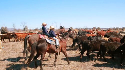 The family moves at the pace of the cattle.