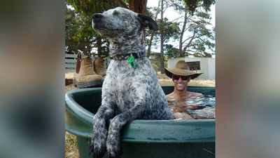 Poppet looking happy to escape the heat with a quick dip in Mount Compass. (Supplied: Andrew Dabovich)