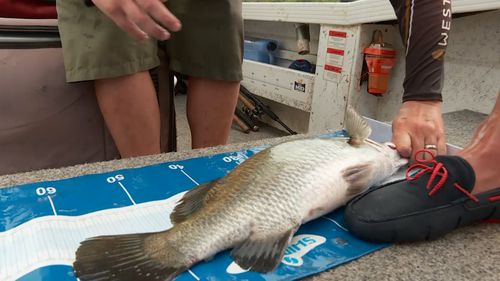 The fish are tagged and thrown back, giving lucky anglers the chance to win big.