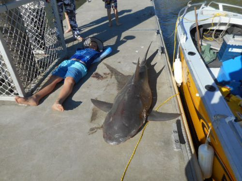 Bull shark leaps into boat of Queensland anglers