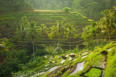 <strong>Ubud, Indonesia</strong>