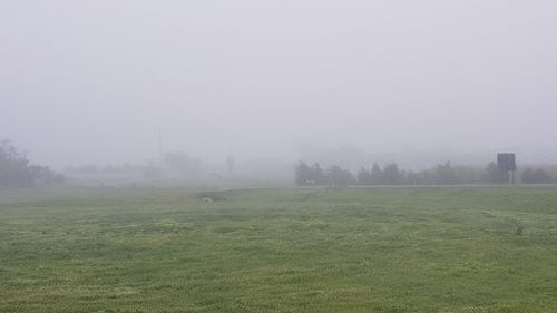 Visibility in Adelaide is at 100 metres according to the Bureau of Meteorology as thick fog blankets the city.