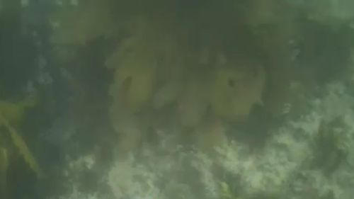 The diver's underwater camera captured the entire adventure. (9NEWS)