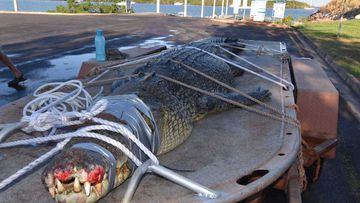 Wildlife rangers say the discovery of the four-metre saltwater crocodile in a Darwin Harbour creek should serve as a warning to locals. Picture: NT Parks and Wildlife