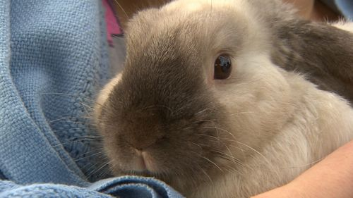 Norman the pet bunny was happy to be rescued.