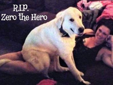 Zero has been hailed a hero after taking bullets for his family.