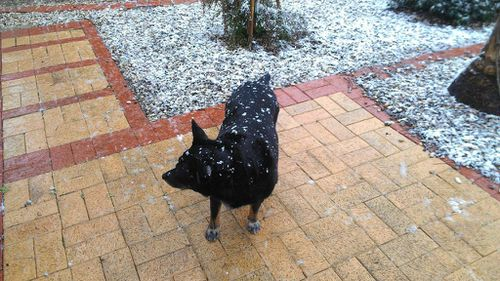 Snow falls in Ballarat. (Twitter, @roadagain65)