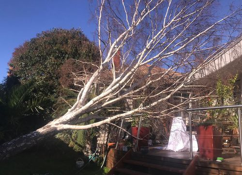 The strong winds have knocked a tree onto a home in the Melbourne suburb of Elsternwick. Picture: 9NEWS