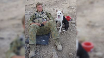 "<p>Nova's handler, Lance Corporal Reuben Griggs (pictured with Nova in Afghanistan), has described her death as ""gut-wrenching"". </p> <p> </p>"