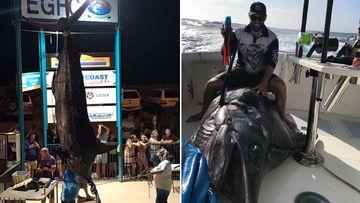 Fisherman reels in 'biggest ever' 494kg marlin catch