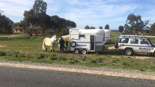 The SA Police mounted brigade is assisting in the search. (9NEWS)