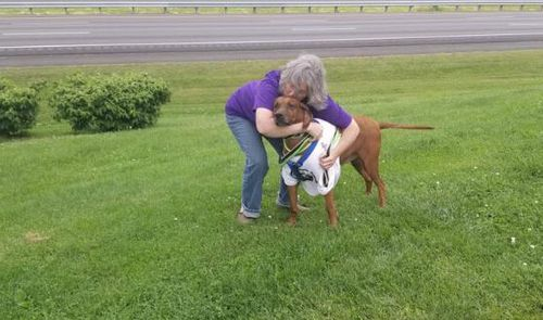 There's mystery surrounding how the pooch ended up in Pennsylvania. Picture: Fcaebook
