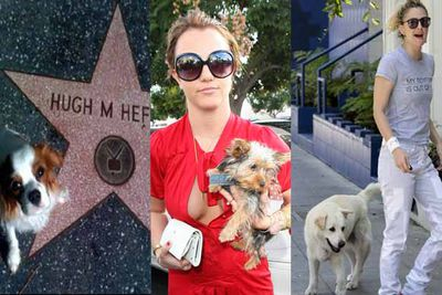 Divorces in Hollywood can get messy. There's the money, the multi-million dollar houses and the children (don't forget the children) to battle over. And of course, the pets. Most recently TheFIX revealed how Khloe Kardashian and Lamar Odom are battling over their boxer puppy and it made us think, who else has wasted millions on reaching a pet custody agreement….