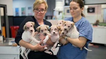 The seven puppies were found with a severe case of mites. Picture: Supplied